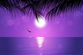 Tropical Pink Sunset — Stock Photo