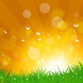 Spring Birds Flight — Stock Photo