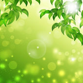 Green Floral Nature Background — Stock Photo