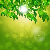 Green Nature Bright Background — Stock Photo