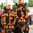 Horses decked in the horse fair in Sevilla, Spain - Stok fotoğraf