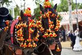 Horses decked in the horse fair in Sevilla, Spain — Stock Photo