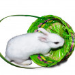 White rabbit in basket — Stock Photo