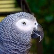 Sly Parrot — Stock Photo