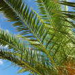 Palm tree against the sky — Stock Photo