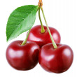 Three cherries with leaf isolated on a white background. — Stock Photo