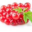 Red currant with leaves — Stock Photo