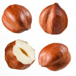 Hazelnut collection — Stock Photo