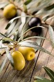 橄榄木背景下 — 图库照片