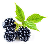Blackberry isolated — Stock Photo