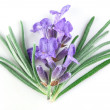 Stock Photo: Lavender macro. isolated