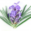 ストック写真: Lavender macro. isolated