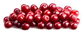 Cherries isolated. fruit background — Foto de Stock