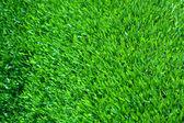 фон зеленая листва. — Стоковое фото
