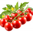 Cherry tomatoes with leaves on branch isolated. — Stock Photo