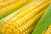 Corn macro — Stock Photo