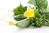 Branch of cucumbers with leaves and flowers — Stockfoto