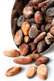 Cocoa Beans in the scoop isolated on a white background — Stock Photo