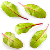 Leaf of salad isolated on white. Chard. Collection — Stock Photo