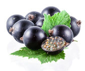 Black currant on white — Stock Photo