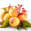 Apricot with leaves — Stock Photo