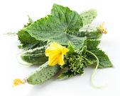 叶子和花的黄瓜 — 图库照片