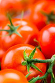 Fresh tomatoes background. Macro — Stock Photo