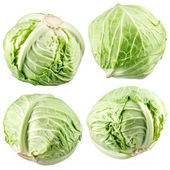 Cabbage collection — Stock Photo