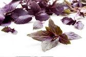 孤立在白色的新鲜紫色罗勒. — 图库照片