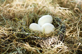 Three white eggs in the straw nest — Stock Photo