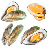 Set of Mussel isolated on white. Collection — Stock Photo