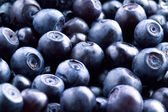 Bilberry — Foto Stock
