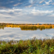 Stock Photo: Ponds Reserve Milickie
