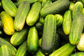Bunch of cucumber — Stock Photo