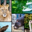 Wild animals - Stock Photo