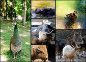 Bunch of animals — Stock Photo