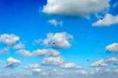 Nuvole e uccelli — Foto Stock