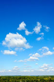 Trees and clouds — Stock Photo