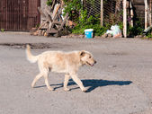 Street dog — Stock Photo