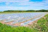 Mini greenhouses — Stock Photo