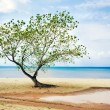Stock Photo: Tree at beach