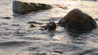 Zee en rotsen — Stockvideo