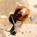 спираль pomatia — Стоковое фото #45158951