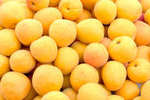Fresh picked apricots — 图库照片