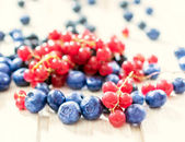 Currant and blueberries — ストック写真