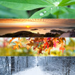 Four Seasons Collage — Stock Photo #34765267