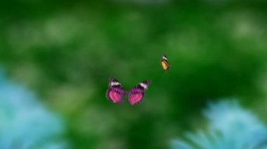 Butterfly flying — Stock Video