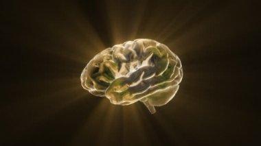 Gold idea X-ray Brain of biology — Stock Video