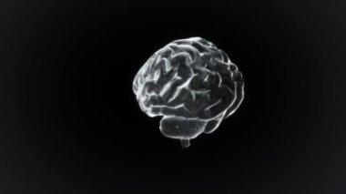 White X-ray Brain of biology — Stock Video