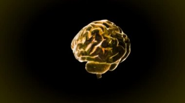 Gold X-ray Brain of biology — Stock Video